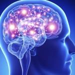 cerebrohumano-640x480